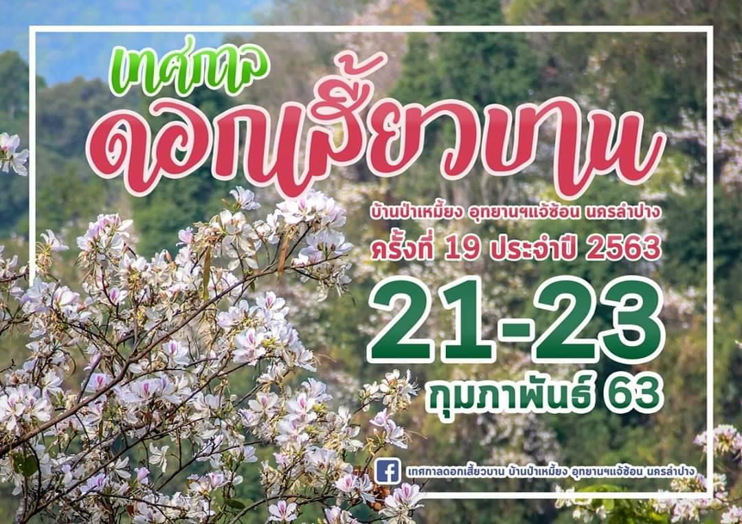เทศกาลดอกเสี้ยวบาน ป่าเหมี้ยง ครั้งที่ 19 ประจำปี 2563